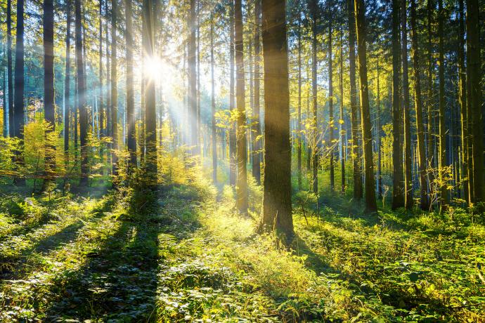 GreenTec Nachhaltig